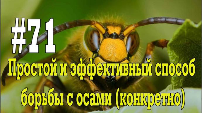 #71 Простой и эффективный способ борьбы с осами (конкретно)